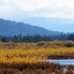 angora-creek-restoration-lake-tahoe