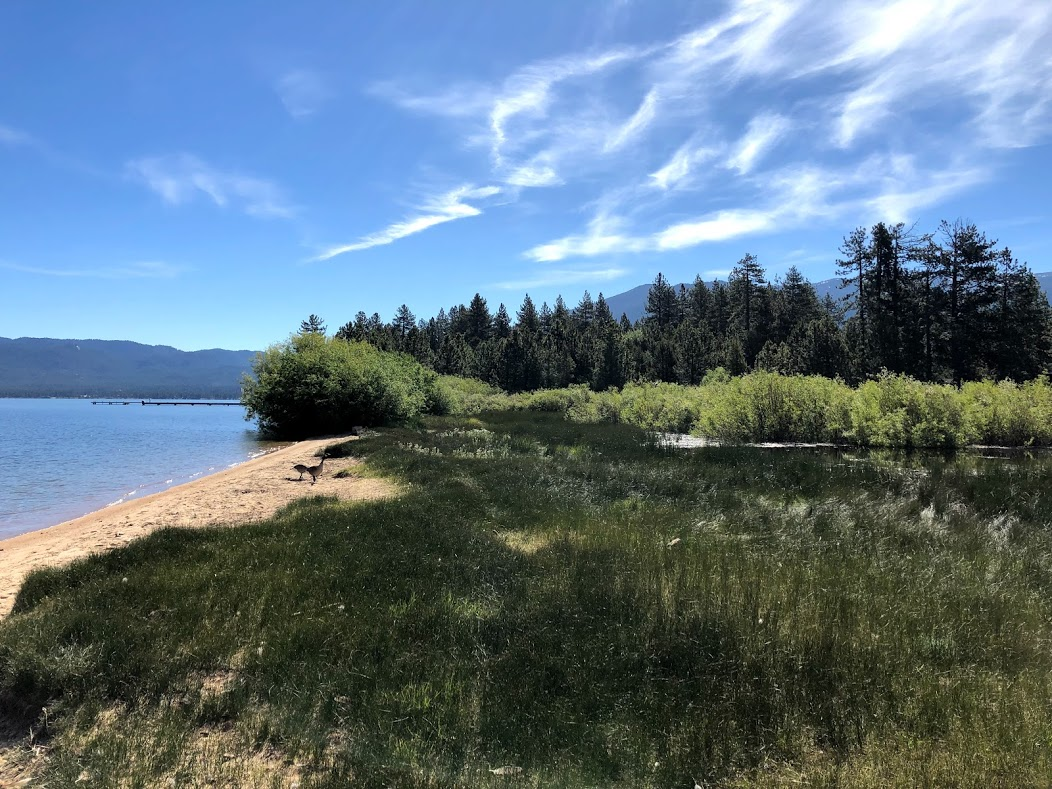 To Protect Wildlife Habitat and Public Safety, Tahoe