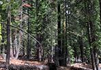 Dollar Creek forest