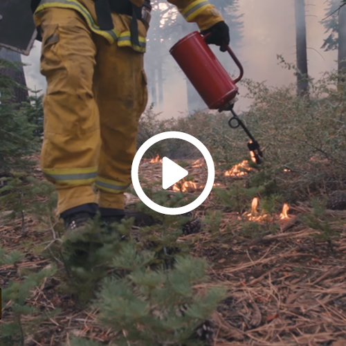 The Value of Prescribed Fire